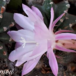 myphoyo fiore closeup