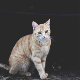 cutie photography cat colorful drama art mystery freetoedit