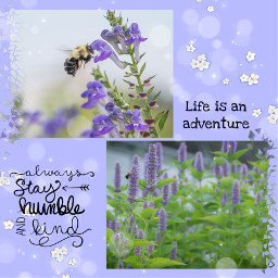 lavender bee purple nature photography flowers flower plants naturephotography adventure quote kind humble purples plant adventures kindness freetoedit