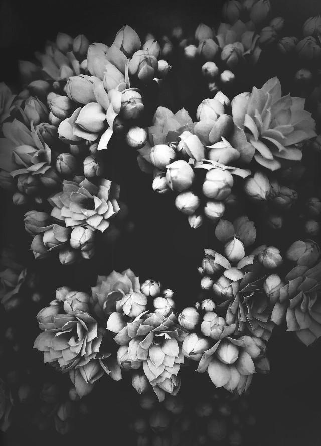 #pcblack&whitenature #nature #flowers #naturesbeauty #blackandwhitenature #monochromatic #monotone #blackanwhitephotography
