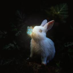 madewithpicsart heypicsart bunny butterfly magic light forest dark cute animal pet plants nature unsplash icyx freetoedit