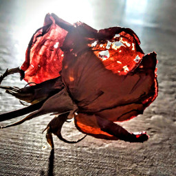 freetoedit dryflowers photography flowerphotography pcautumnflatlay autumnflatlay aditings spreadlove