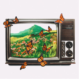 butterfly srcsmallscreen smallscreen freetoedit