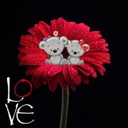 love bear cutebear flower red freetoedit