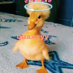 quaxxy freetoedit