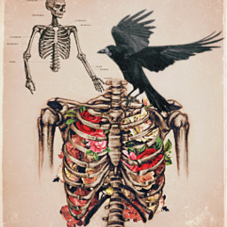 freetoedit anatomy skeleton humanbody blackbird crow flowerart