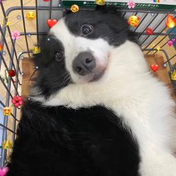 freetoedit dog hearts corazones corazon stickers sticker cute cutie tierno meme reaction reactions