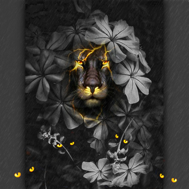 Rumble in the Jungle🦁🦁🦁  #freetoedit #artistic #artisticportrait #blackandwhite #editbyme #picsarteffects #magiceyes#lionking#heypicsart