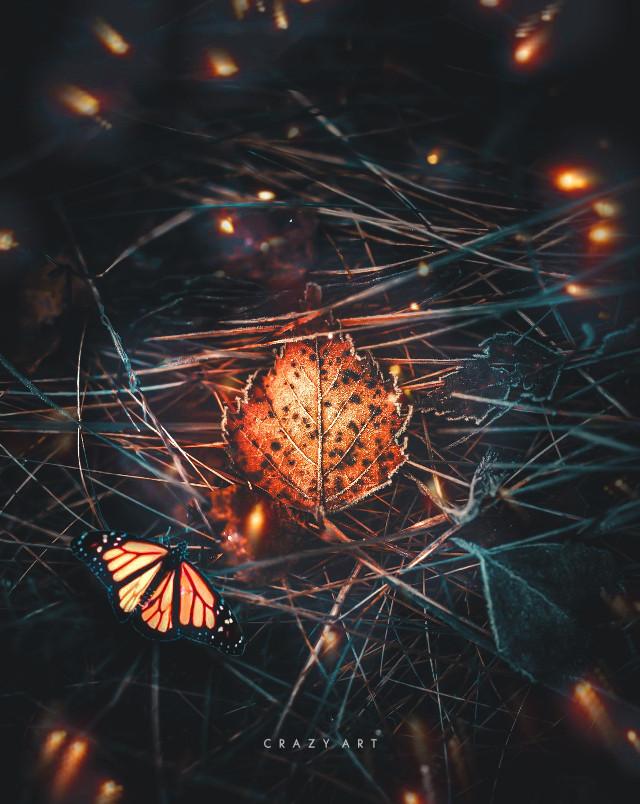 #freetoedit #picsart #madewithpicsart #leaf #golden #butterfly  ,, ,, @stone90 @fauspre @romanova_art @heleen12 @azulita330187 @reversevisuals @mohuuu @sd_creations365_ @iam-boski @elvina1332 @orient_arts @nisacreations @stickers_nation