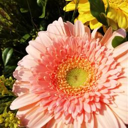 spring flower pcprimavera primavera