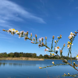 freetoedit bluesky littleflowers lake lovelyday darkblue beautiful nature naturaleza lago hermoso clouds nubes