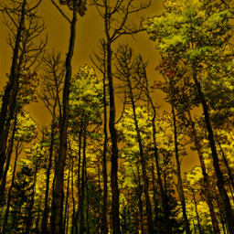 nature naturephotography trees forest aspens autumn colorful colorado freetoedit