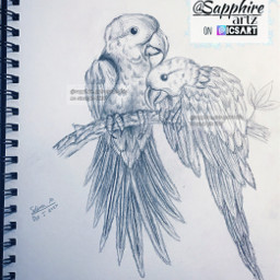 art pencilsketch sketch parrots birds birddrawing drawing parrotdrawing cute project traditionalart pencildrawing feathers