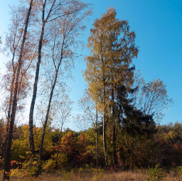 freetoedit forest trees autumn nature