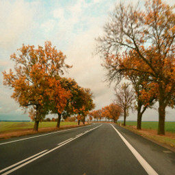autumn autumnvibes fall trees leafs road motion myphoto myclick heypicsart picsartmaster freetoedit