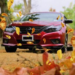nissan altima cars jdm jdmlife jdmlifestyle nissanaltima fall leaves nissanlife carporn carpic freetoedit