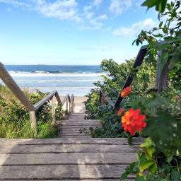 amoviajar ilovetraveling tbt❤ florianopolis-sc brasil🇧🇷 praia dia mar flores caminho background myphoto trip freetoedit tbt florianopolis brasil pcprimavera primavera