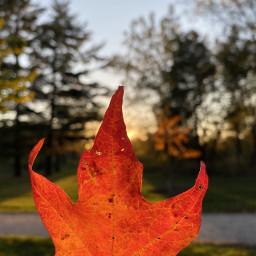 freetoedit fall autumn leaf red georgeous beautiful myfavoriteseason illinois forest love life hiking familytime