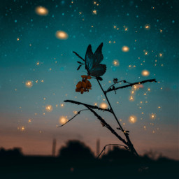 beauty night sky dream dreamy star stars sparkles fantasy fantastic butterfly beautiful colors pretty magic magical surreal lights light nature starry imagination myedit freetoedit