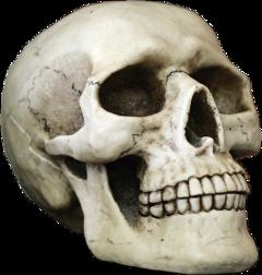 skull halloweendecorations freetoedit