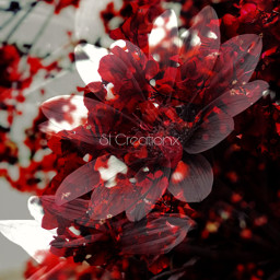 repost freetoedit picsart sicreationx red flowers floral
