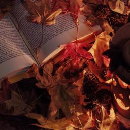 photography fall autumn leaves freetoedit pcautumnflatlay autumnflatlay