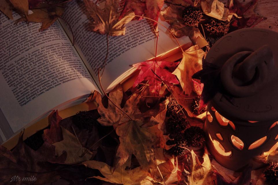HAPPY WEEKEND DEAR FRIENDS 🎃🎃🎃#photography #fall #autumn #leaves