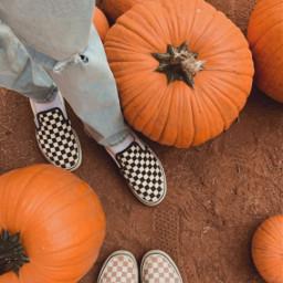 addahashtagtomakeyourphotoeasytodiscover pcautumnflatlay autumnflatlay