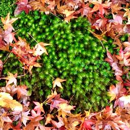 freetoedit autumnleaves green background photography pcautumnflatlay