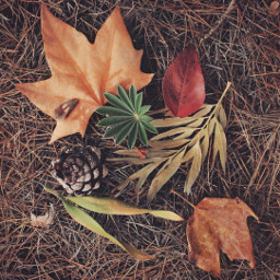 pcautumnflatlay nature autumnvibes fallcolors earthytones freetoedit
