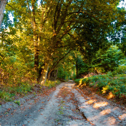 freetoedit road forest trees photography nature