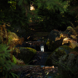 creek water stream plants green yellow moss fern trees stone dark light atmosphere tranquility japanesegarden botanicalgarden garden fall photo photograpy canon canon700d photoshop photoshopcs5 freetoedit