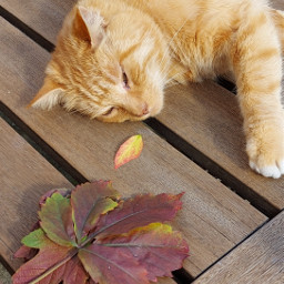 pcautumnflatlay autumnflatlay