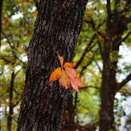 leaveschanging autumnflatlay