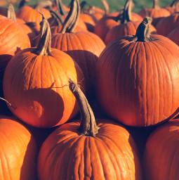 freetoedit pumpkins october pcautumnflatlay autumnflatlay