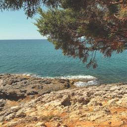 nature coastline rocks rockysurface tree freetoedit