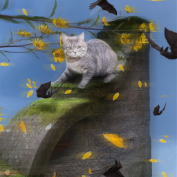 mastershoutout cat bats petals flowers wind ftestickers picsarteffects madewithpicsart animals