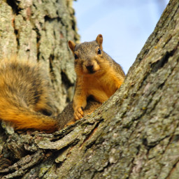 freetoedit squirrel tree cuteness lovely loveanimals adorehim bestseason inlove nikonphotography