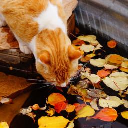 leaveschanging pcautumnflatlay autumnflatlay