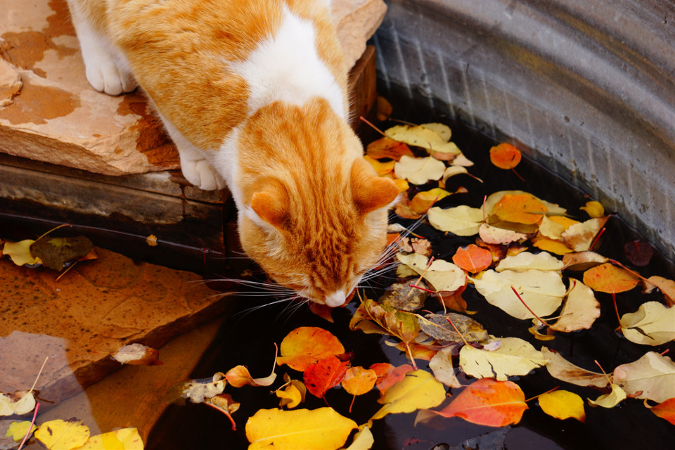 #leaveschanging