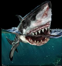 fish whale water blue ocean animal fstickers freetoedit