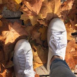 leaves pcautumnflatlay autumnflatlay