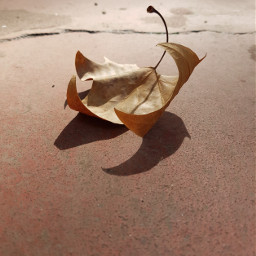 freetoedit autumn leaf fall photography