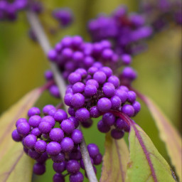 kinora closeup nikon3500 purple lovenature nature walking freetoedit