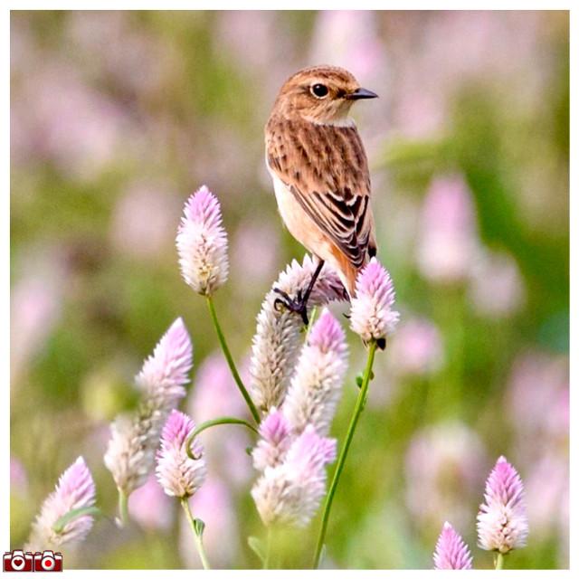 #icu_japan #ig_cameras_united #bird