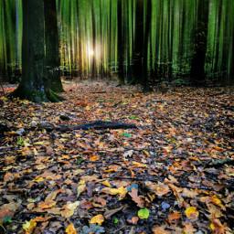autumn autumnvibes fall forest fallcolors woodland trees sunlight myart myphoto madewithpicsart heypicsart picsartmaster picsartmastercontributor joannart becreative blureffect freetoedit