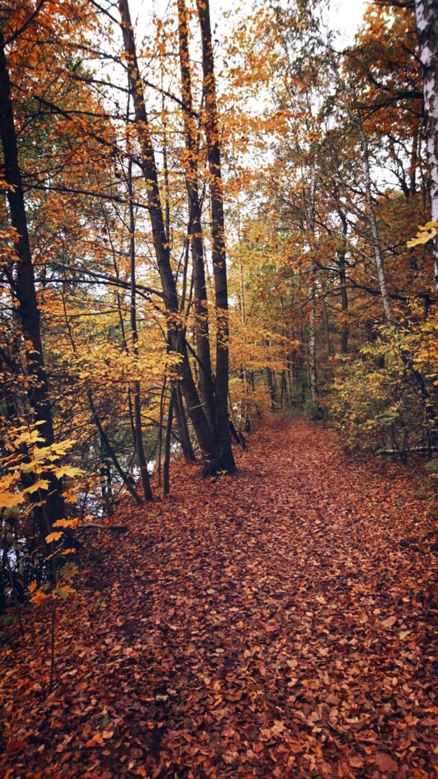 #autumn #autumnvibes #fall #forest #fallcolors #road #forestroad #leafs #trees #nature #landscape #naturephotography #myphoto #myclick #HeyPicsArt #picsartmaster