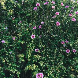 wallflower flower green plants freetoedit