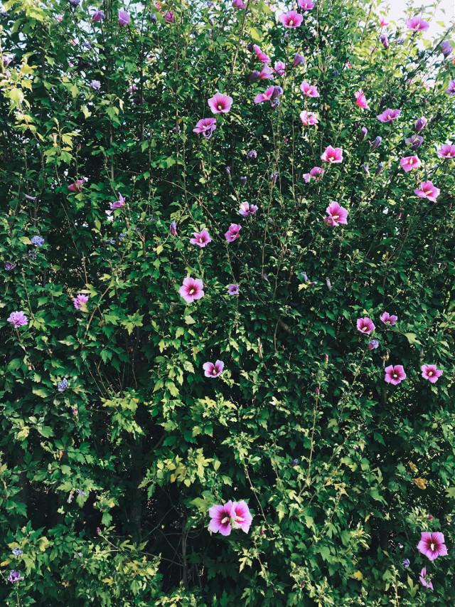 #wallflower #flower #green #plants #freetoedit