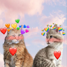 cat_love freetoedit